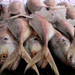 Comer pescado, bueno para la salud
