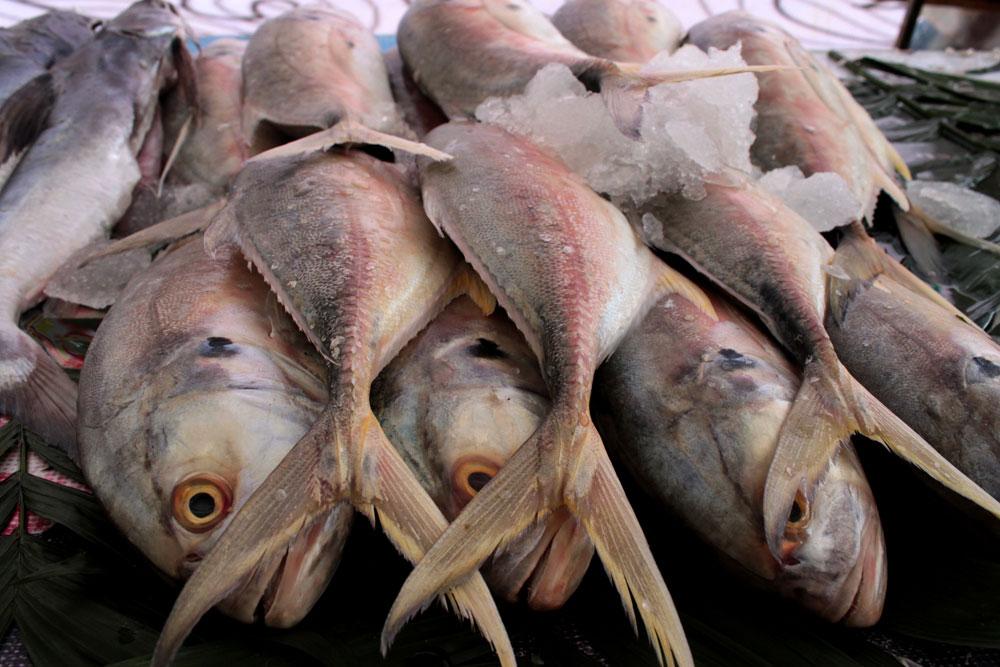 pescado-bueno