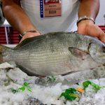 Superan Pescamar y Exporestaurantes expectativas