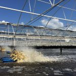 Acuicultura producirá casi dos tercios del pescado en 2030