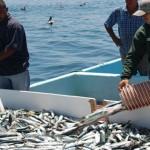 Piden campesinos crear Secretaría de Pesca