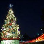 Compra pino mexicano en Navidad