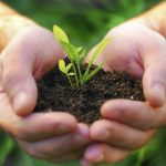 Las plantas emiten olores que ayudan a combatir las plagas y enfermedades