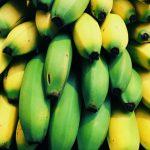 Plátano resiste plaga