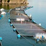 Promueven acuacultura como opción de autoempleo