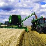 Presentan trigo resistente al calor, sequía y enfermedades