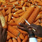 La producción mundial de cereales apunta a un nuevo récord