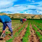 Productores de EEUU serán aliados de México en renegociación del TLCAN