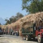 Productores de Veracruz condicionan arranque de la zafra