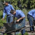 Profesionales técnicos de México recibirán capacitación agrícola en Brasil
