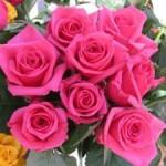 Prolongan la vida de las rosas sin tratamientos químicos