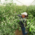 Protección contra plagas en agricultura nacional