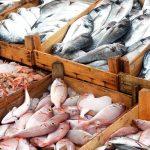Protegen producción y consumo de pescado