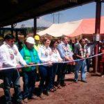 Aumenta actividad maderera en Puebla