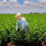 La reconversión de cultivos