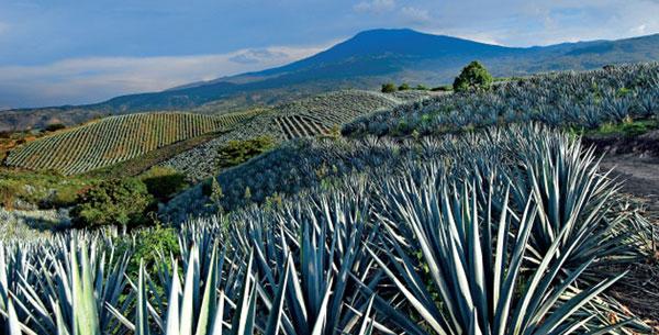 Resultado de imagen para consejo regulador de tequila