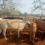 Sagarpa asegura 44.6 millones de unidades animal