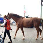 Verifican sanidad en caballos
