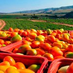 Sector agroalimentario mexicano