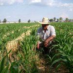 Garantizarán seguridad de trabajadores del campo
