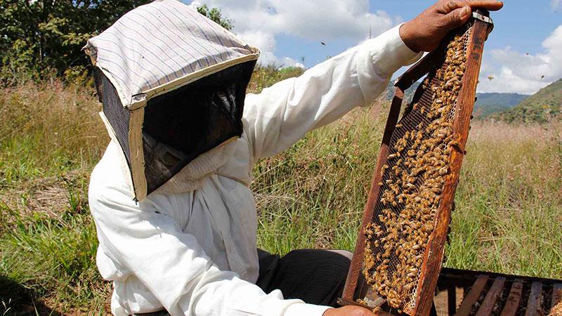 seguro-apicultura