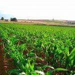 Seguros agrícolas en Sinaloa