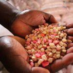 Semillas de emergencia contra hambre en Nigeria