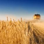 Senado estadounidense modifica subsidios agrícolas