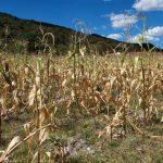 Sequía provoca pérdidas y daños en Guerrero