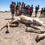 Sequía en el Cuerno de África