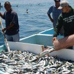 Sierra, un pescado de tradición en México