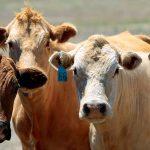 ¿Cómo evaluar el sufrimiento animal?