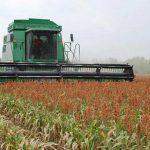 Tamaulipas espera producción de más de 3 millones de toneladas