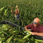 TLCAN podría afectar sector agroalimentario