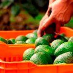 Top 5 de productos agroalimentarios mexicanos