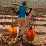 Trabajo infantil en la agricultura