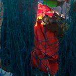 Detienen a cuatro presuntos traficantes de totoaba en BC