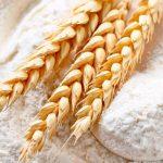 Trigo, un cereal para llevar pan a todo el mundo