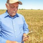 Se incrementa producción de trigo Hecho en México
