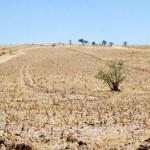 Urge impulsar proyectos contra desertificación: CNC