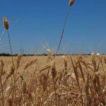 Variedad de cultivos