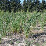 Crean supervegetales resistentes al clima
