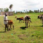 Veterinarios itinerantes ayudan a familias campesinas en Haití