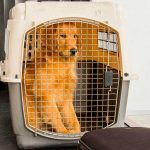 Lo que debes tomar en cuenta si vas a viajar con tu mascota