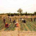 Voluntarios de ONU y FAO combaten hambre